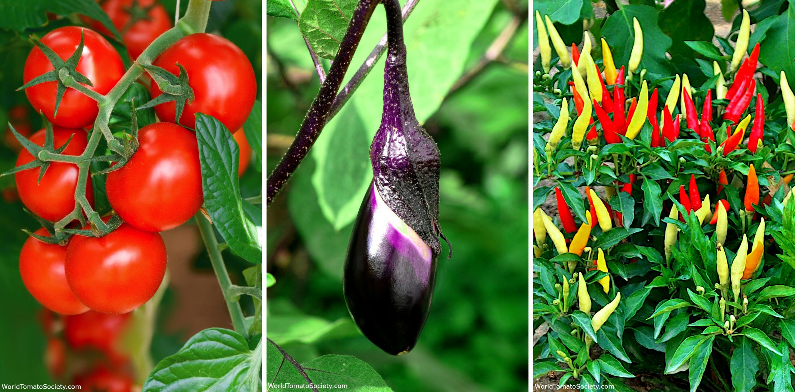 ARTICLE Buying Garden Seeds Everything You Need To Know Part Edit