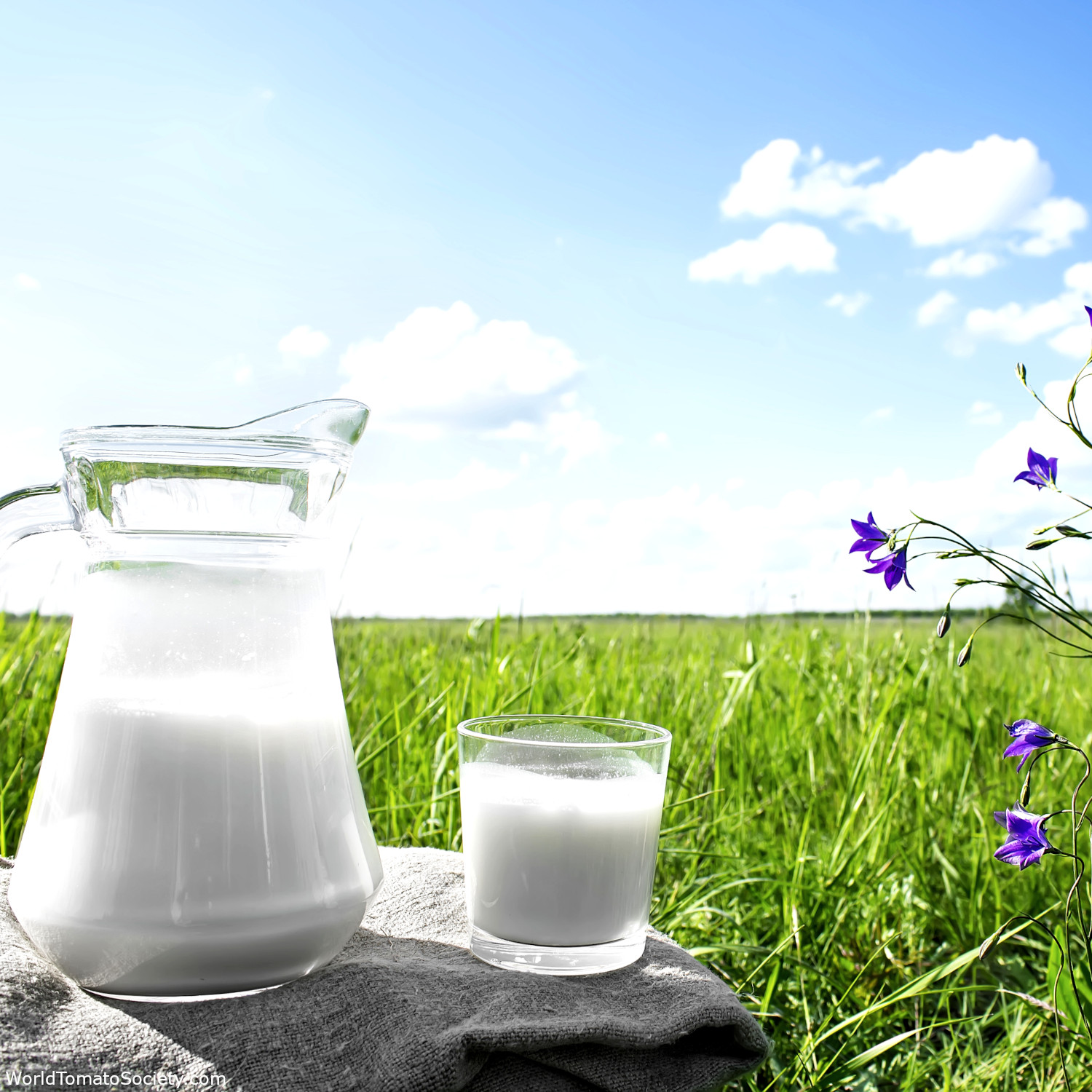 ARTICLE Milk and Molasses Magic for Your Garden Part a Edit