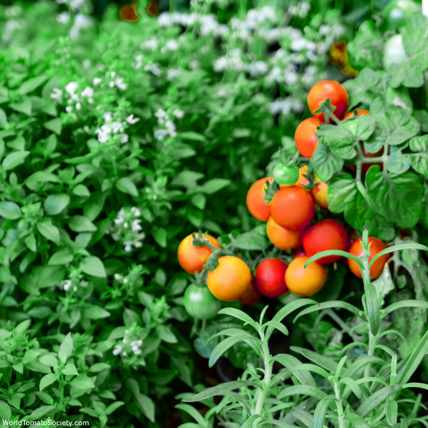 ARTICLE Ten Expert Tips for Raised Garden Beds and Planters Edit