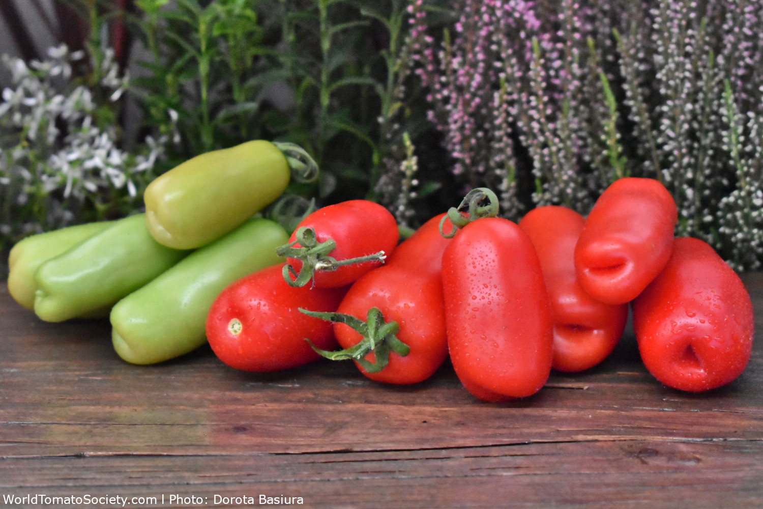 ARTICLE Tomatoes Part Edit