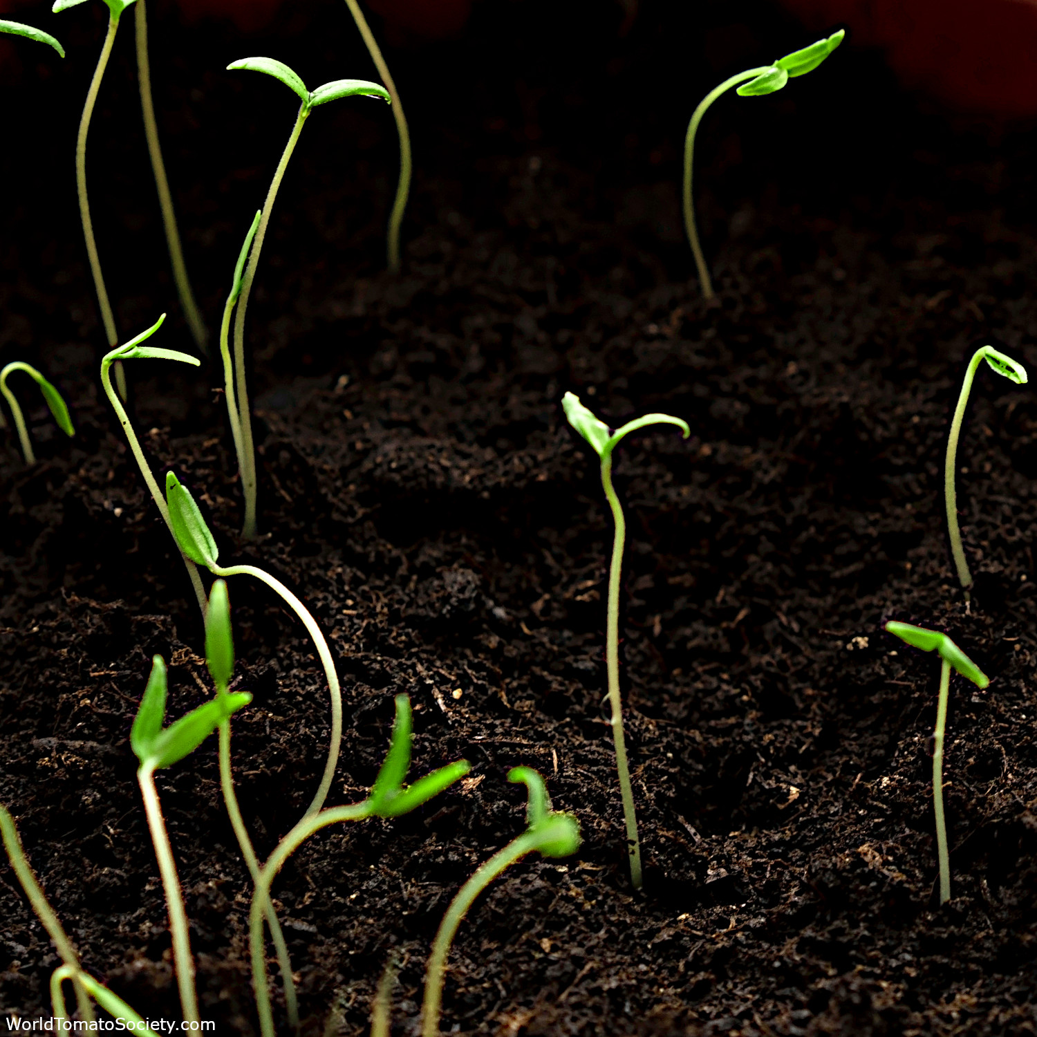ARTICLE What Happened To My Seed Germination Part Edit