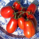 Akers Plum from TomatoFest